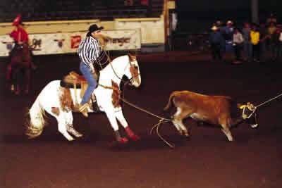 Horses Veteran Roper And His American Paint Finish