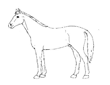 ... Horses for Educational Purposes at the Horse Breeding forum - Horse