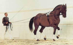 Lunging Cavesson And Side Reins
