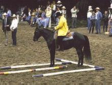 A Trail Riding Class